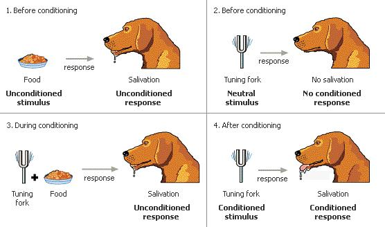 Classical Conditioning The Most Basic Type of Associative Learning - examples of classical conditioning