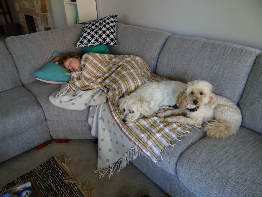 House Sitting Adelaide Pet And Housesitting In Australia Exploramum And Explorason