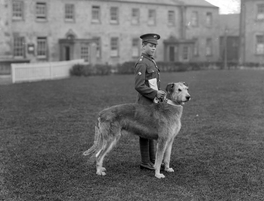 Horrible Irish Band Drummer D At Waterford Barracks Irish A History Explore Blarney Blog Irish Wolfhound Dog Breeds Irish Dog Breeds bark post Irish Dog Breeds