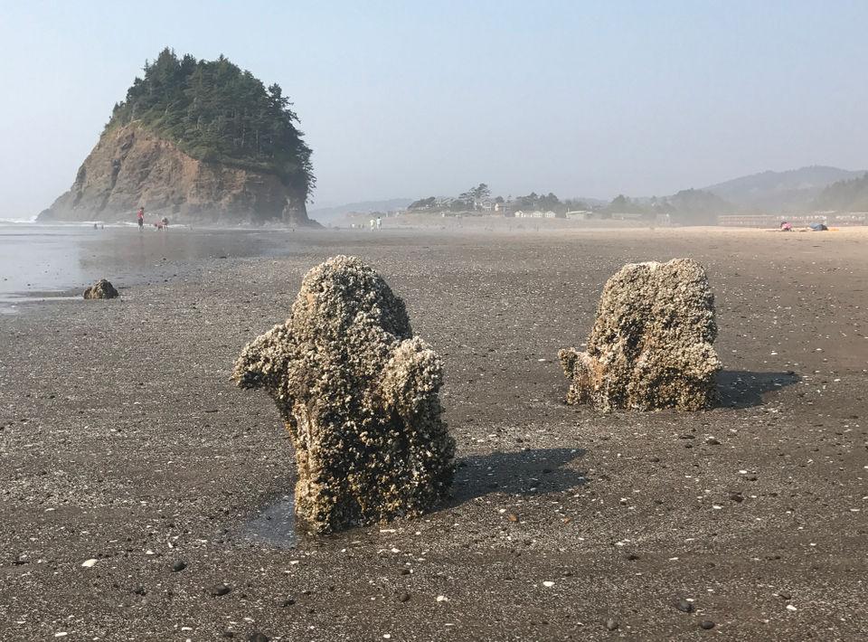 10 low-tide treasures on the Oregon coast OregonLive