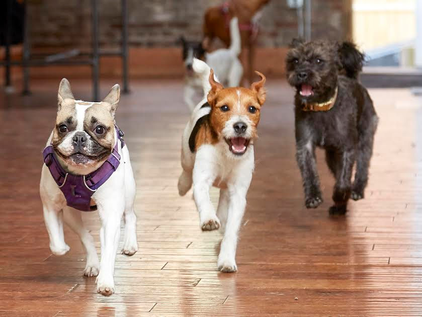 10 pet stores that are uniquely Upstate NY NewYorkUpstate