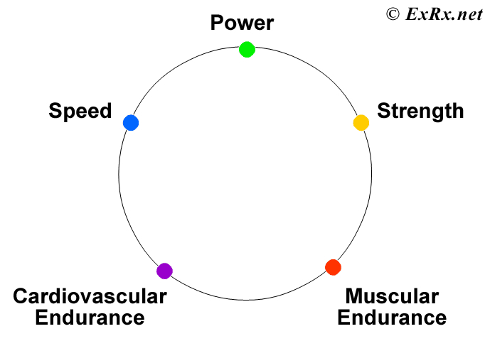 ExRxnet  Fitness Components - components of fitness