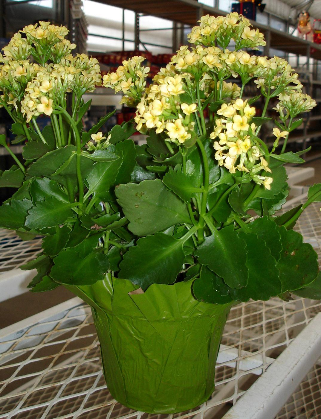 Small House Plants With Flowers Chase Away Winter Blues With Blooming Houseplants Mississippi