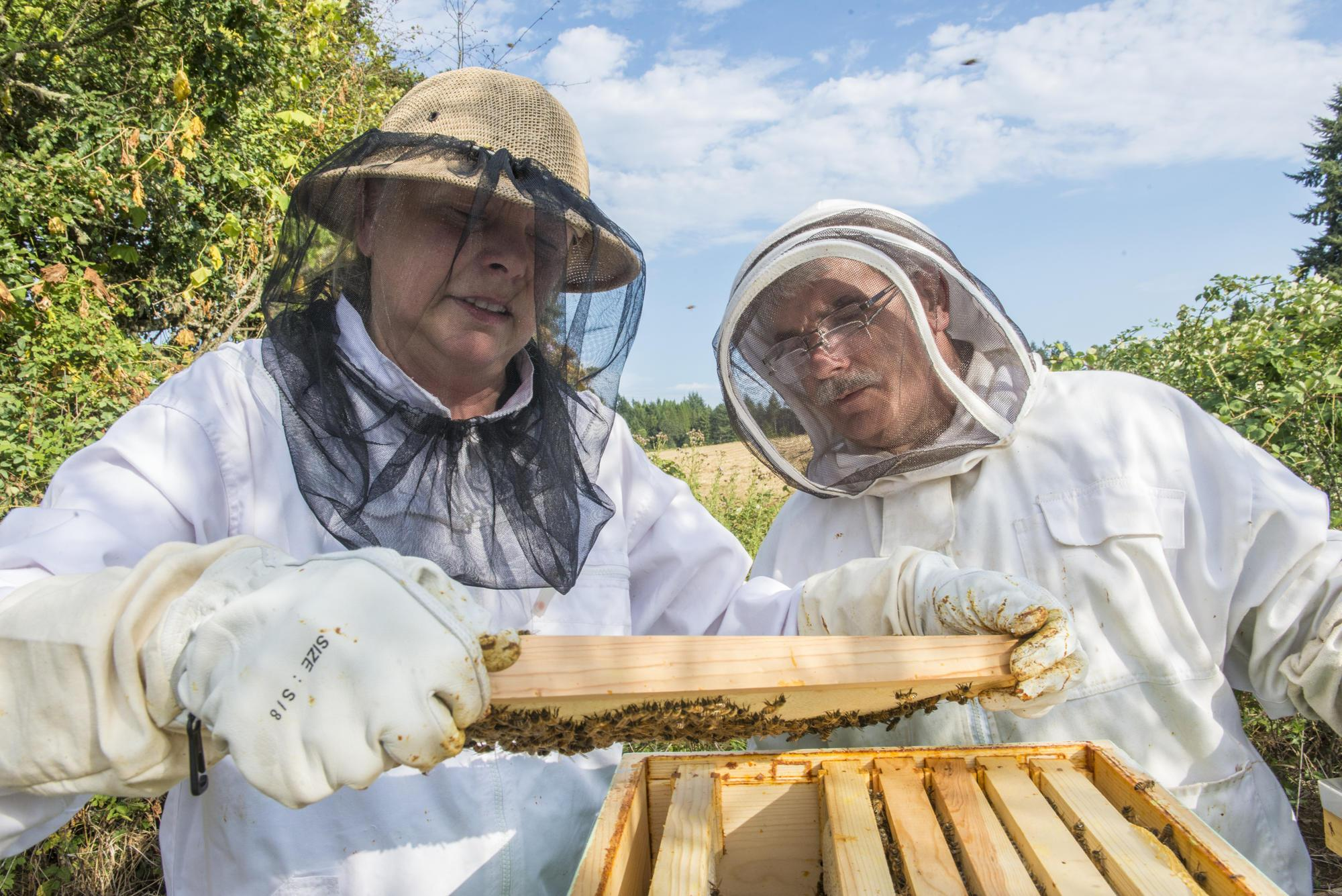 Health Care Management Science Oregon Master Beekeeper Program | Osu Extension Service
