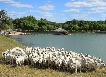 A fazenda de Zezé fica no interior goiano às margens do Araguaia