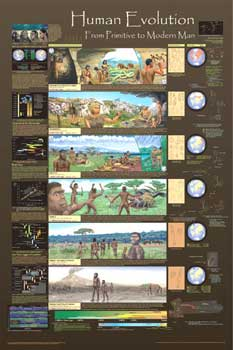 A103 Human Evolution Poster