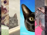 ExTV Presents: Kitten Party!
