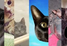 ExTV Presents: Kitten Party!
