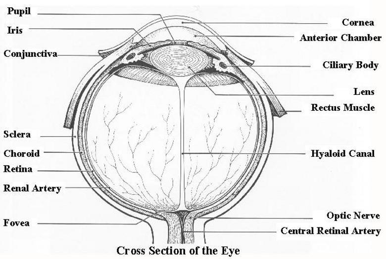 vision system diagram