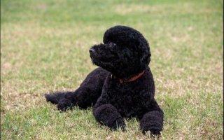 whitehousedog2