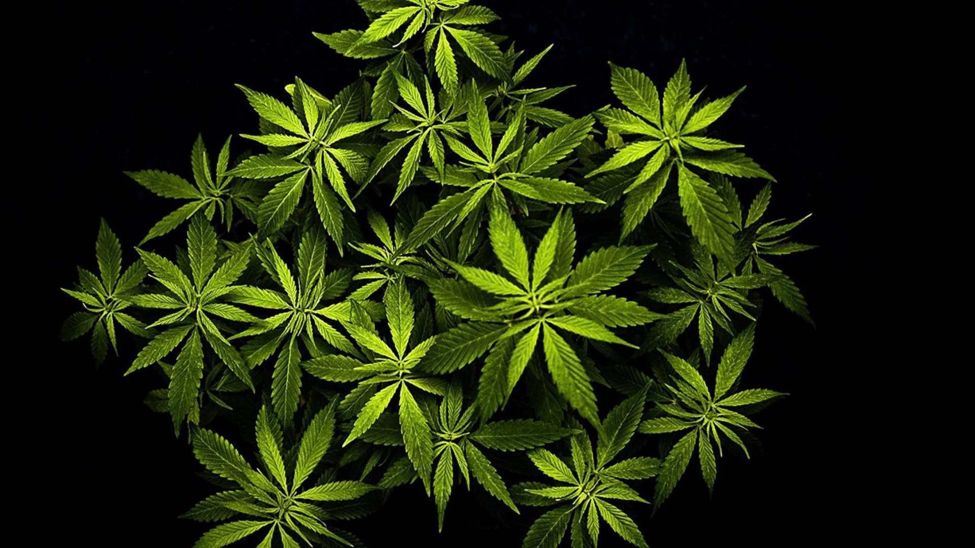 Cool Wallpapers For Phones 3d Cannabis Mary Jane Wallpaper For Desktop 1920x1080 Full Hd