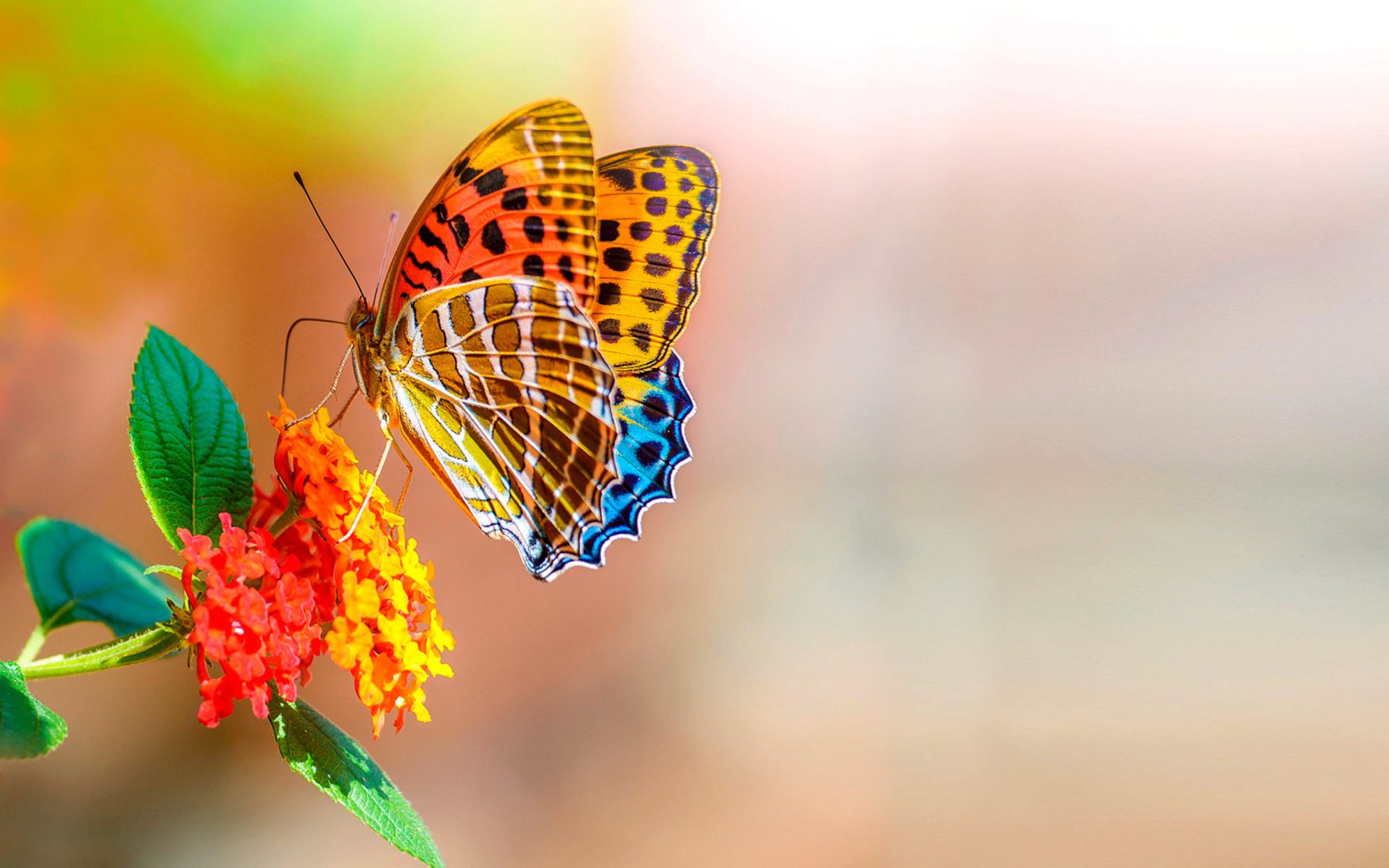 London Girl Wallpaper 1920x1200 Colorful Animated Butterfly Wallpaper For Widescreen