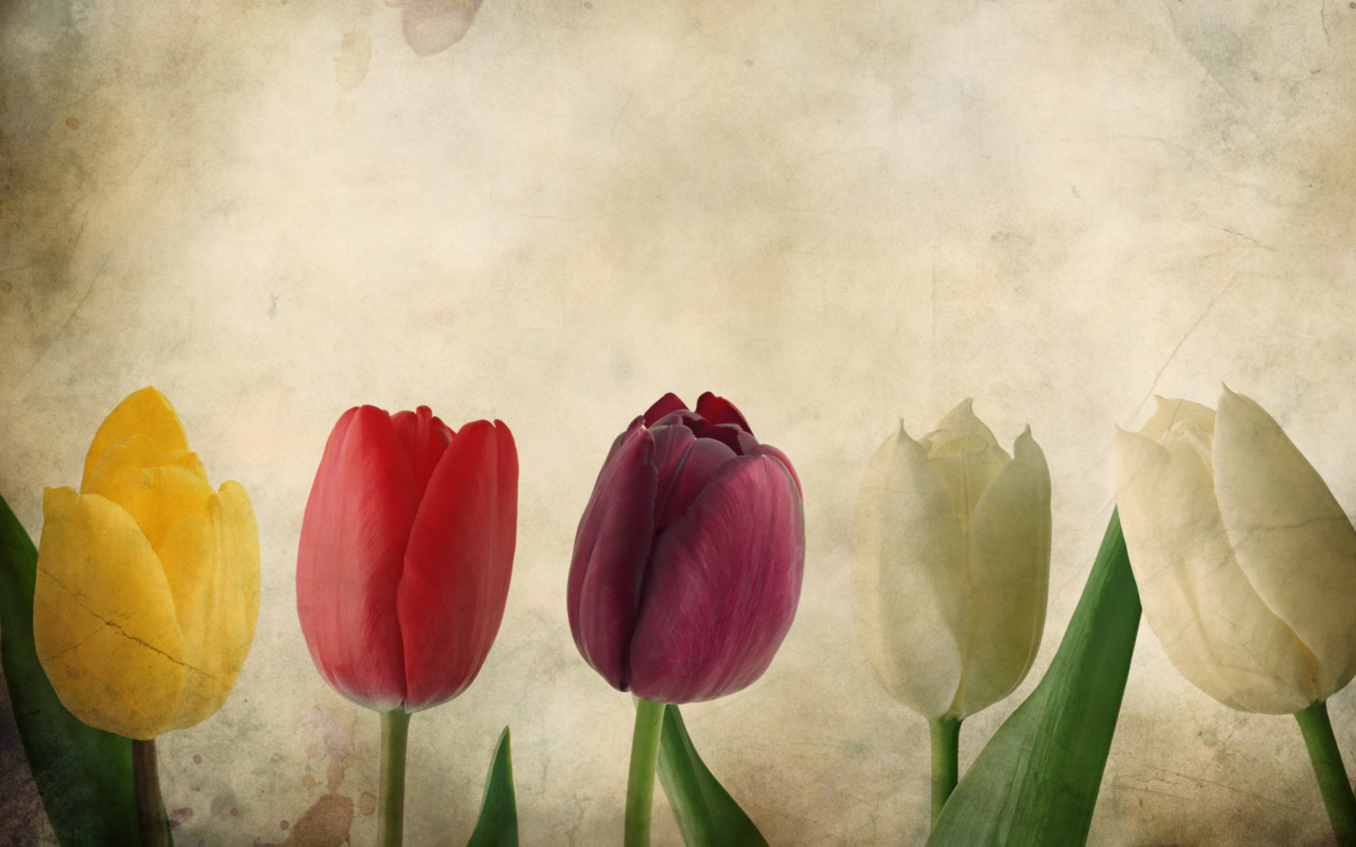 Street Racing Cars Wallpaper With Girls Tulips Vintage Wallpaper For Widescreen Desktop Pc