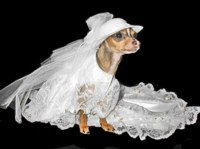 The Well-Dressed Dog At A Wedding: 10 Awesome Dog Bridal Gowns