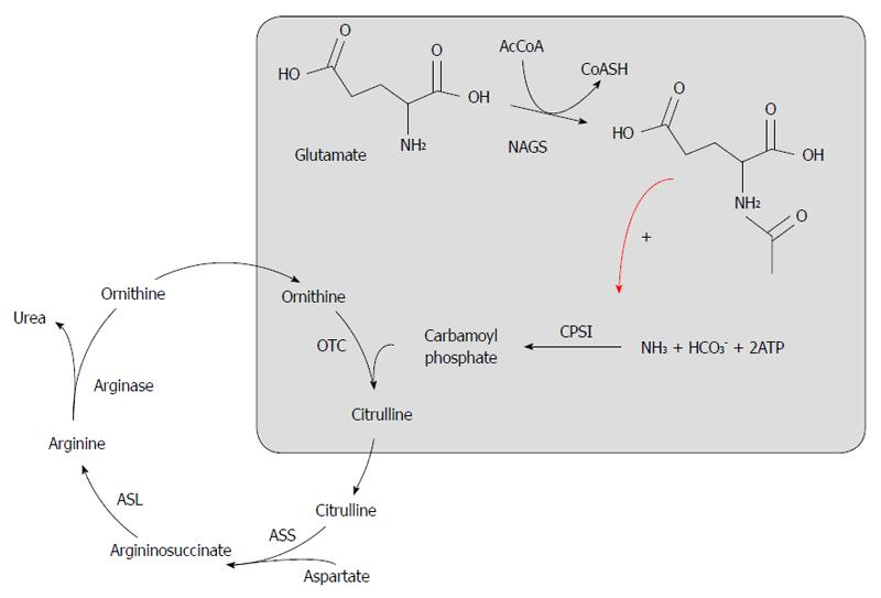 Urea cycle disorders A case report of a successful treatment with - urea cycle