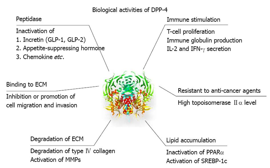 Dipeptidyl peptidase-4 A key player in chronic liver disease