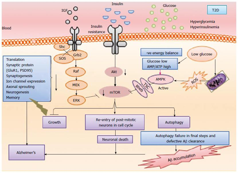 Molecular and biochemical trajectories from diabetes to