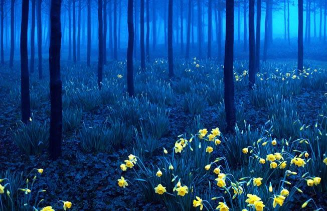 Den storte skogen i Tyskland