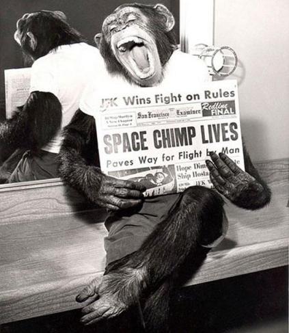 Fornøyd apekatt etter tur i verdensrommet, 1961