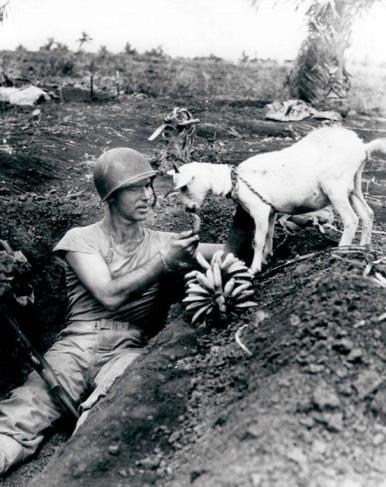 Soldat deler banan med en geit ved slaget  ved Saipan, 1944