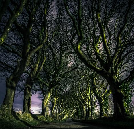 The Dark Hedges County Antrim, Nord Irland