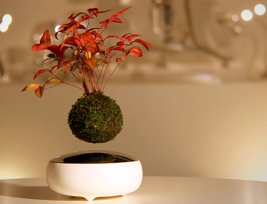 Plante D'interieur Orange Plantes En Lévitation Avec Le Air Bonsai