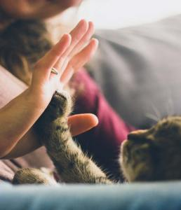 Person being high-fived by a kitty