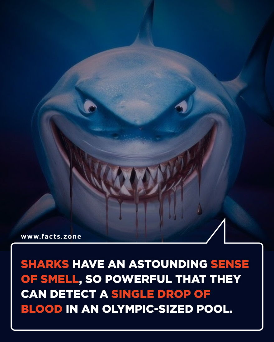 Powerful Quotes Phone Wallpaper Facts Zone Sharks Have An Astounding Sense Of
