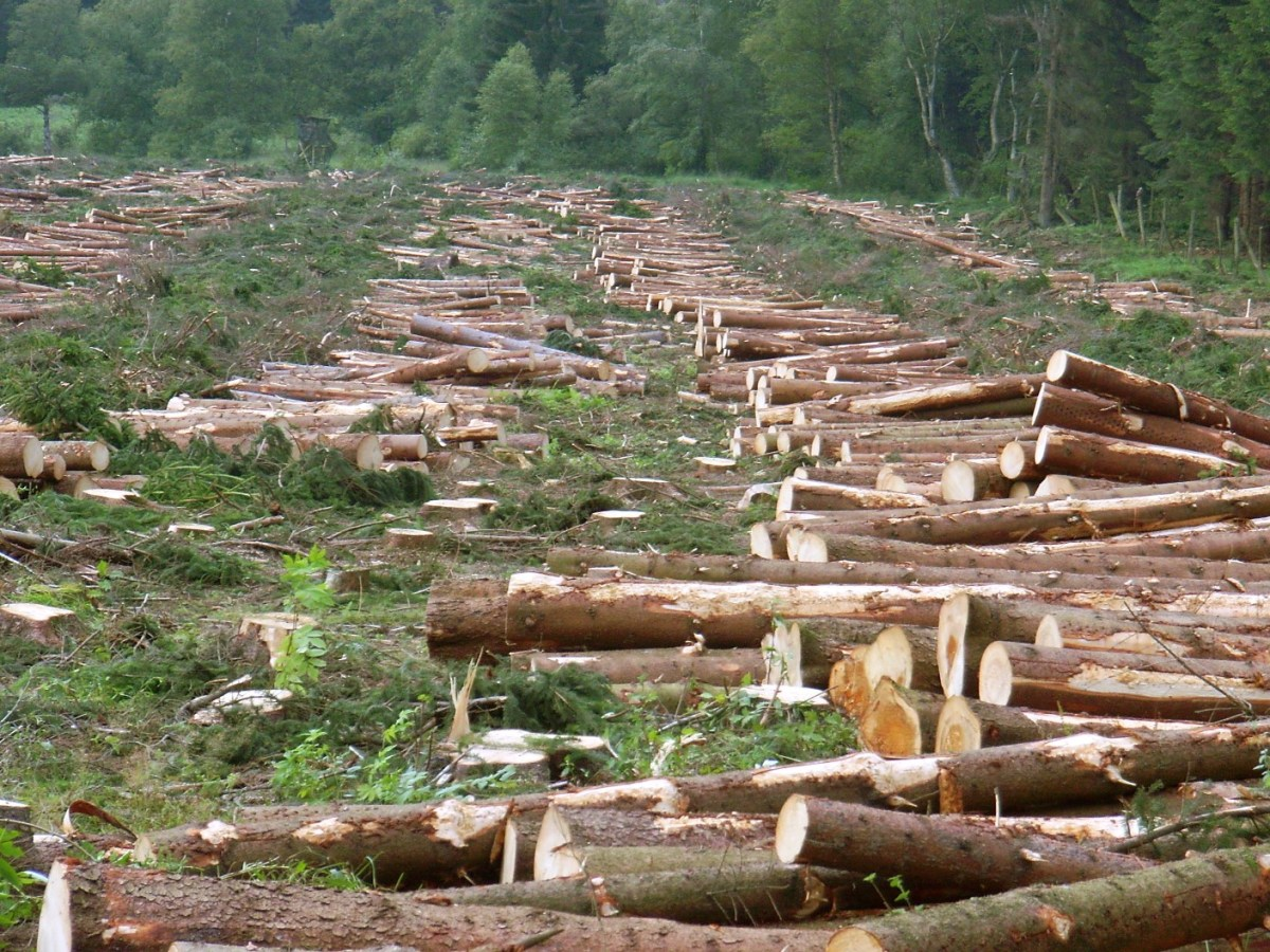 Deforestation Facts For Kids | Facts About Deforestation For Kids