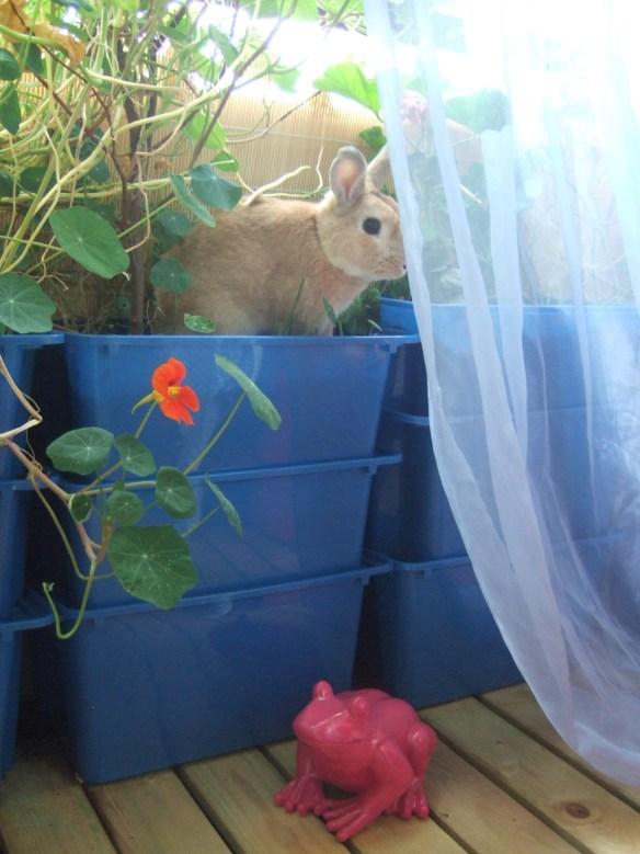 kanin på balkongen