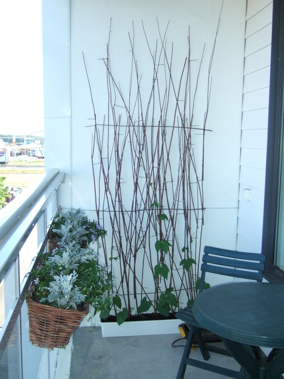 balkong klätterväxter stöd