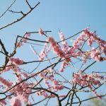 梅が香る神さまたち。全国の梅の名所とされる神社をご紹介。