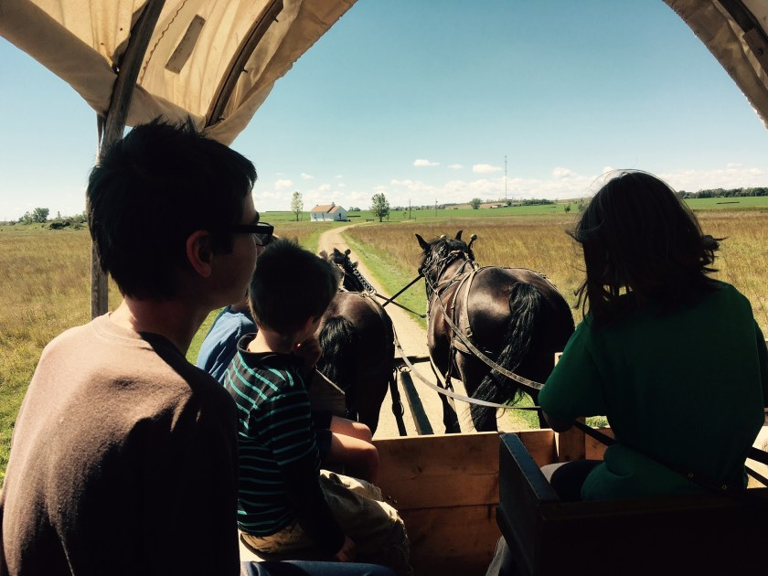 driving the horses