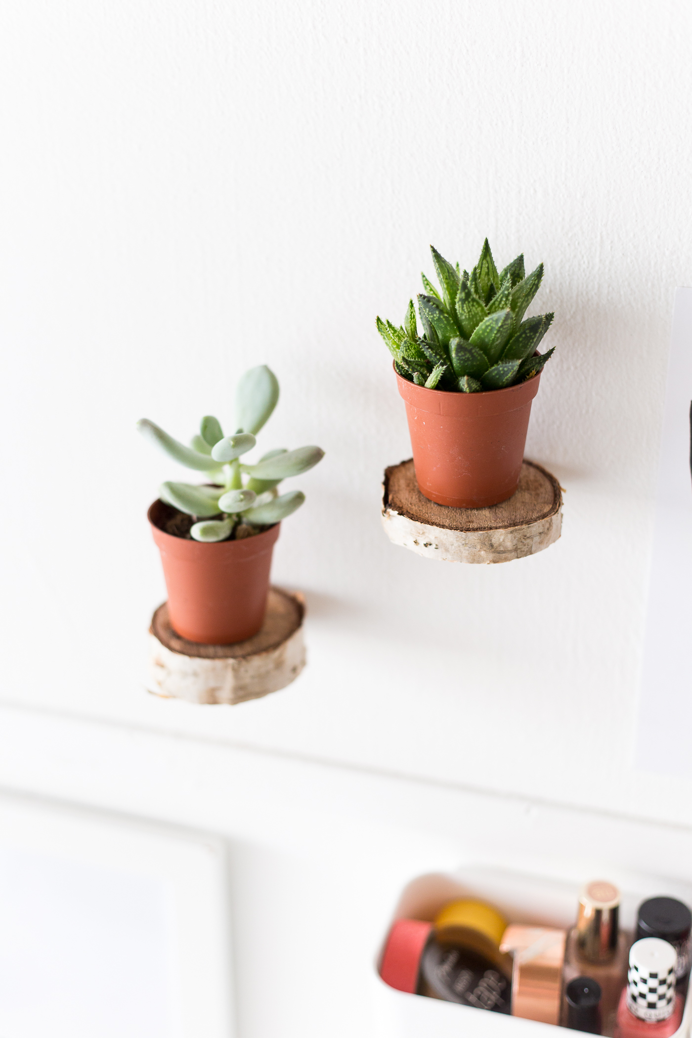 Plant Shelves For Walls Make Floating Plant Shelves From A Birch Wood Round