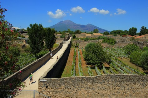 Walled vineyards in Pompeii. Photo by BW.