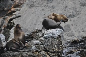 Aug in Aug mit einem Wal - Unser Tag im Humboldt-Nationalpark - Im Humboldt-Nationalpark