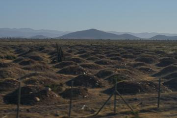 Höhenrausch und Salzkristalle - Wüstenglück in der Atacama - Auf dem Weg nach San Pedro de Atacama