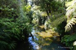 Waitakere Ranges Regional Park - auf dem Auckland City Walk