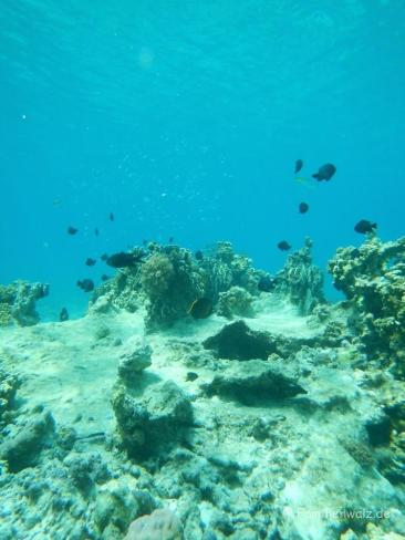Unterwasserwelt vor Calangaman