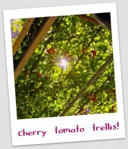 vertical gardening- trellis