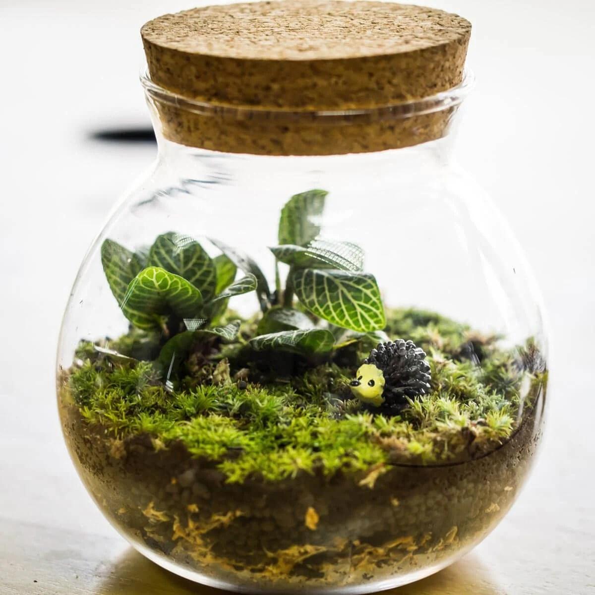 Diy Humidifier For Terrariums Myianicolee Enclosures Gecko