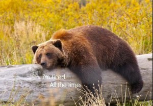 Not joking. I was a grizzly bear in a former life. It's time to hibernate!