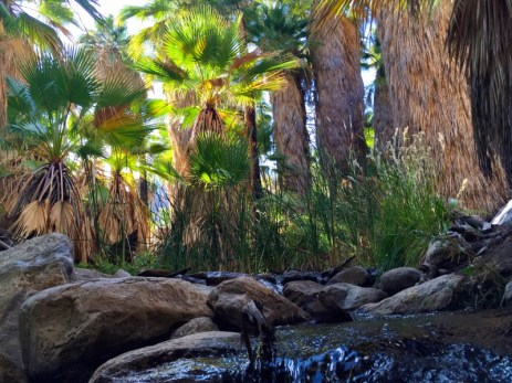 Indian Canyons, Palm Springs