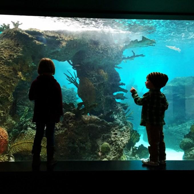 NY Aquarium Glovers Reef