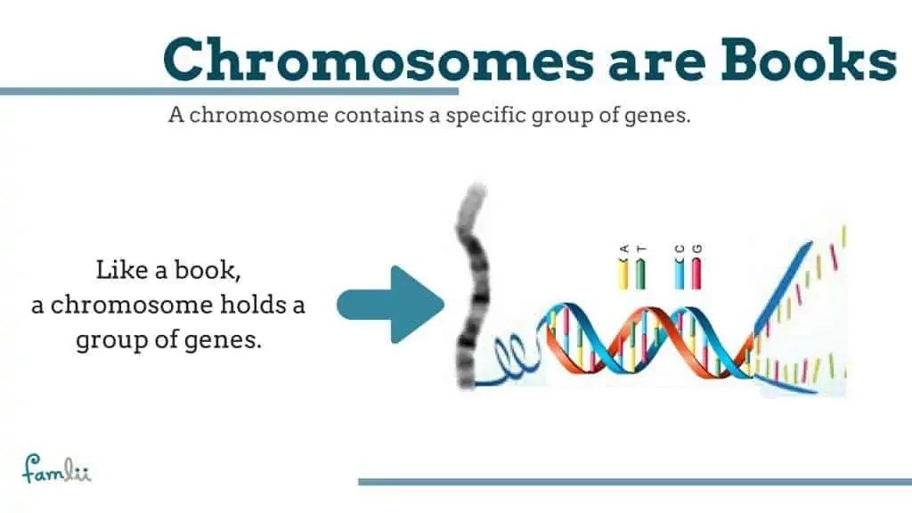 Chromosome Kid What Is A Chromosome? Simple Definitions For Understanding