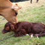 Welcome, Bessie!