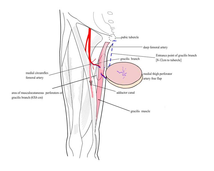 foot region anatomy diagram