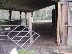 Leaping Lamb Farm 12-06 (gate, lambs, fall hay field) 009