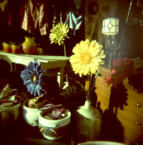 Flowers blooming in the windows