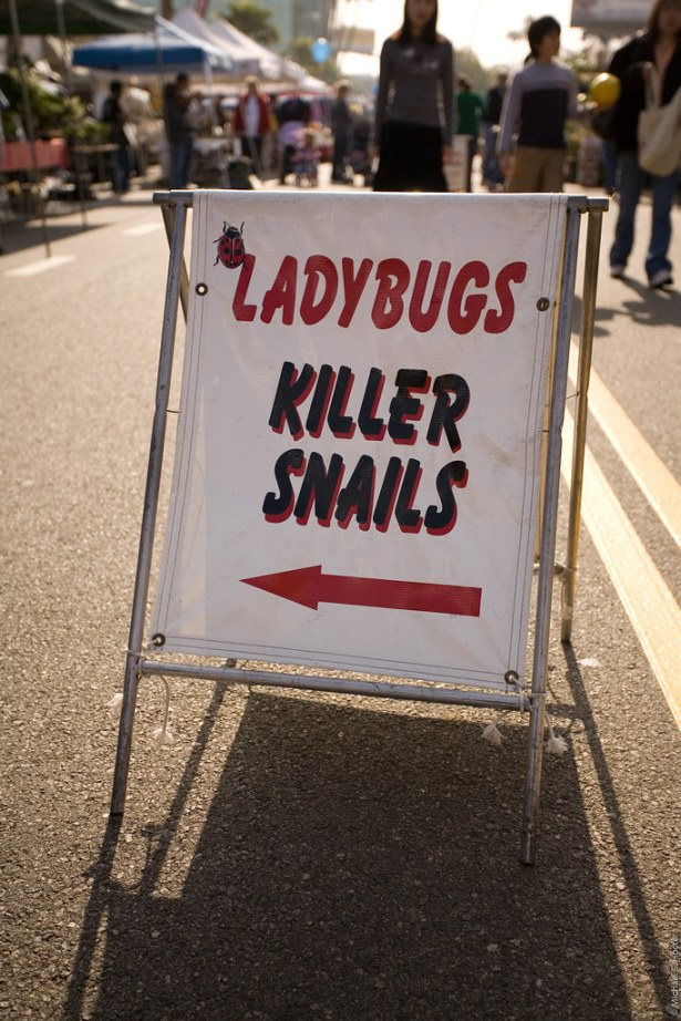 OMG, Killer Snails?!?!?!